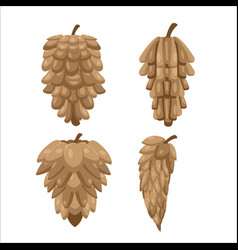 Pine cones collection isolate set vector