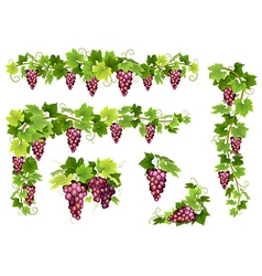 Set of bunches red grapes vector image vector image