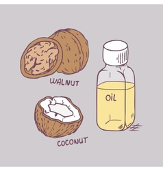 Healing coconut and walnut oils set in vector