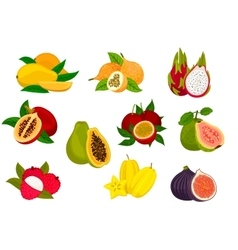 Exotic tropical fruit isolated icon set vector image