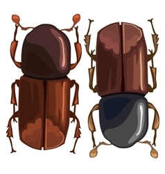 Black-brown beetle on a white background vector