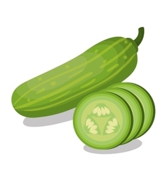 Fresh cucumber vegetable isolated icon vector
