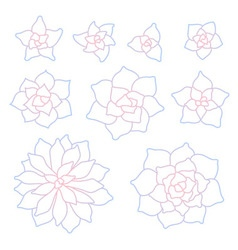 Line art succulent plant set vector