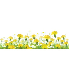 spring flower isolated vector image