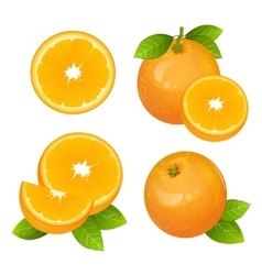 Fresh orange fruit slice set collection of vector