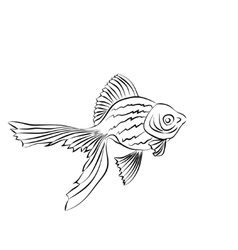 Goldfish image on white background vector