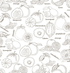 Seamless pattern with citrus fruit on white vector