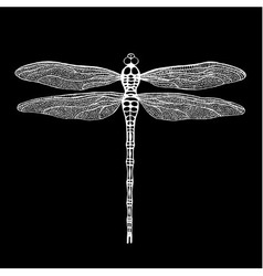 Dragonfly white dragonfly on black background vector
