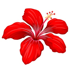 A red hibiscus plant vector