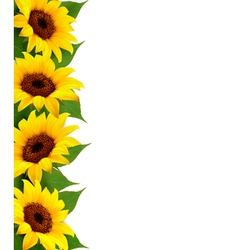 Sunflowers background with sunflower and leaves vector