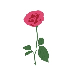 a rose on a white background vector image vector image