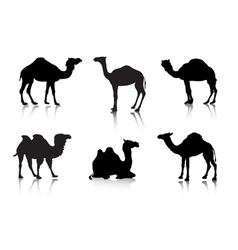 From a series silhouettes animals a camel vector