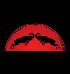 ibex fighting mountain goat battle vector image vector image