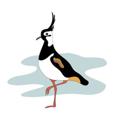 Lapwing bird vanellinae cartoon image vector