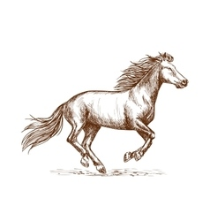 White horse running gallop sketch portrait vector