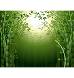 A bamboo rainforest vector