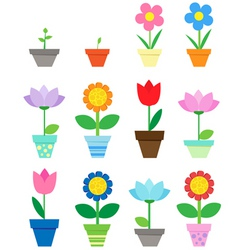 pot flowers vector image