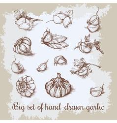 Hand drawn big garlic set vintage retro background vector