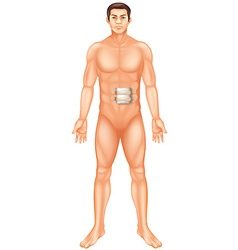 Man with injury on stomach vector