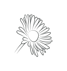 Camomile or daisy flower simple black lined icon vector