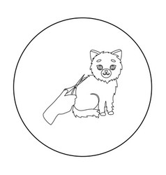 Grooming of a cat icon in outline style isolated vector