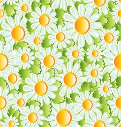 Chamomile background vector