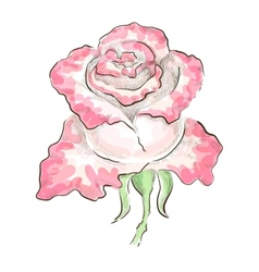 Dichromatic rose vector image