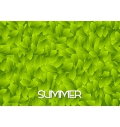 Abstract green summer leaves texture vector image