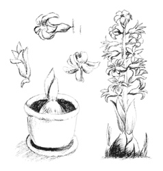 Sketch of blossoming hyacinth hand drawing with vector