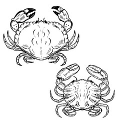 Hand drawn crabs isolated on white background vector