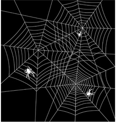 spiders and webs vector image vector image