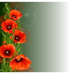 Poppy background vector image