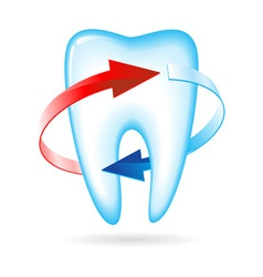Tooth with arrows vector