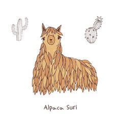 Alpaca suri hand drawn doodle vector