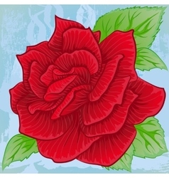 Bright red rose blooming vector