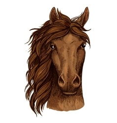 Horse head sketch of brown arabian racehorse vector