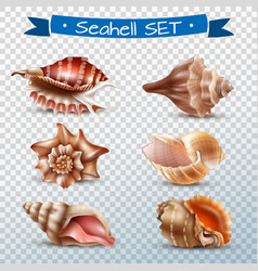 seashell transparent set vector image