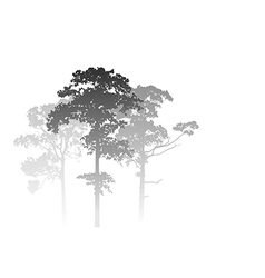 Misty forest landscape vector