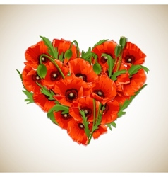Flower heart of red poppies vector image vector image