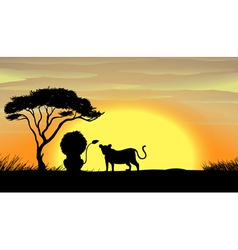 lion and tiger under a tree vector image