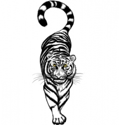 black and white crouching tiger vector image