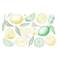 hand drawn lime or lemon set vector image vector image
