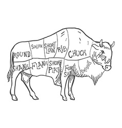 Hand drawn buffalo isolated on white vector