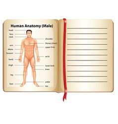 Human anatomy on a page vector