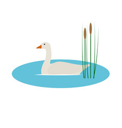 Wild goose in pond with reeds vector
