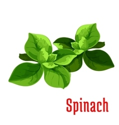 Spinach leaves vegetable icon vector