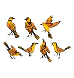Golden oriole isolated on white background set vector