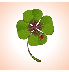 clover with ladybug vector image vector image