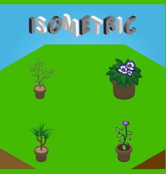 Isometric plant set of fern flower houseplant vector
