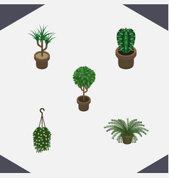 Isometric plant set of plant houseplant blossom vector